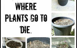 i need plant gardening advice, gardening