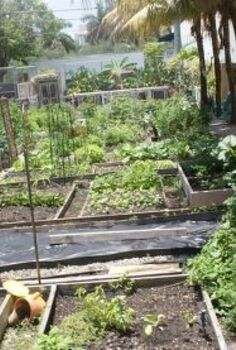 new pictures, gardening, raised garden beds, Raised bed gardens are popular throughout the country because of fewer insect issues