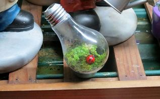 light bulb terrarium, gardening, terrarium, Moss terrarium in a light bulb