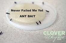 homemade ant bait, pest control, I mix the ingredients listed above together thoroughly in a glass measuring cup I stir until the sugar is completely dissolved then I dip a cotton cosmetic pad into the solution I then place the saturated pad on a plastic lid