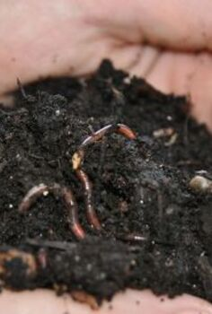 diy project vermicomposting in a tub in a few easy steps, composting, diy, gardening, go green, homesteading, urban living, Red wriggler worms used for indoor vermicomposting Did you know they can live up to 15 years