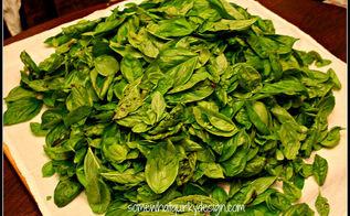 winterizing basil, gardening, Pick the leaves