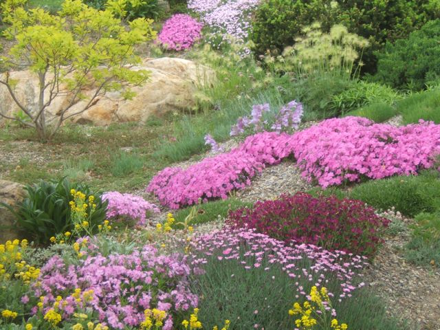 Rock Garden Tips and Plants – Rock Garden Plants