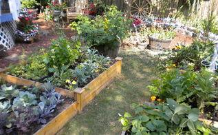 my backyard garden, flowers, gardening, outdoor living, More veggies