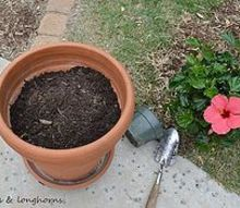how to plant in large pots without spending a fortune, container gardening, flowers, gardening, One good sized plant with room to grow will do It looks every bit as beautiful as a mixed container