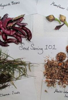 diy seed saving 101, flowers, gardening, Seed Saving 101