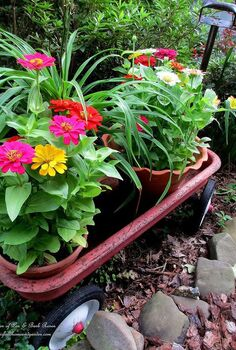 garden walk mid july in my garden, flowers, gardening, hydrangea, succulents, zinnias in the nursery wagon