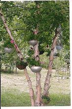 i love collecting many things including colanders, flowers, gardening, My colander tree