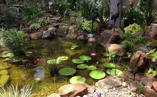 charming backyard water garden in richmond tx features a constructed wetlands filter, gardening, landscape, ponds water features, Constructed wetland filter keeps the pond clean clear and healthy and doesn t look like a filter at all
