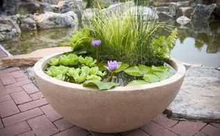 container water gardens, container gardening, gardening, ponds water features, This patio pond is available at