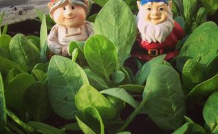 4 tips for spring veggie gardening, gardening, raised garden beds