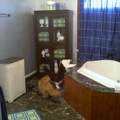As you can see I had a little help in deciding the towels, rug and curtain just weren't working.