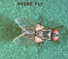 what is the best way to get rid of houseflies, pest control