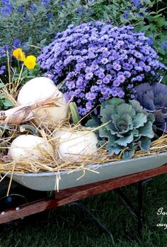 autumn wheelbarrow, container gardening, gardening, home decor, Old wheelbarrow filled with hay ornamental cabbage fall asters sedum white pumpkins and pansies makes a nice Fall display http pinterest com barbrosen