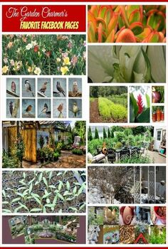 the garden charmers share their favorite facebook gardening pages, flowers, gardening, succulents, The Garden Charmers love facebook gardening pages