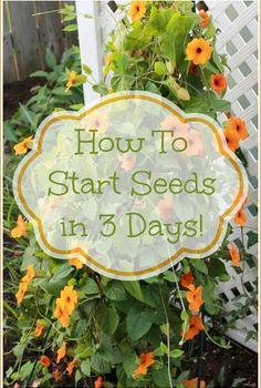 how to start seeds in just 3 days, gardening, Black eyed susan vine