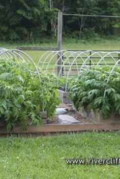 raising potatoes in raised beds, gardening, raised garden beds