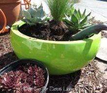 succulent planter, flowers, gardening, succulents
