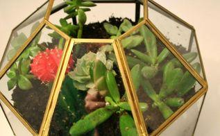 pendant light turned terrarium, flowers, gardening, repurposing upcycling, succulents, terrarium, Pendant Light Turned Terrarium Tutorial