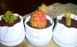 repurposed cooking oil and vinegar bottles as cacti planters, gardening, repurposing upcycling, paint them white for a dainty touch cacti in repurposed cooking oil vinegar bottles
