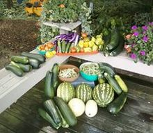 vegetable harvest, gardening, Wonderful harvest