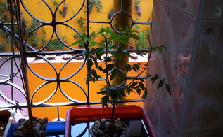 my garden, flowers, gardening, terrarium, NEEM TREE IN INDOOR OPEN TERRARIUM