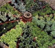 herb garde, gardening, Wagon Wheel Herb Garden