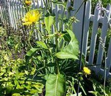 q mystery plant, gardening