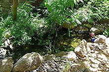 donald, landscape, outdoor living, ponds water features