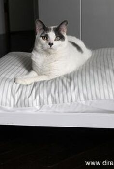 diy midcentury pet bed, diy, painted furniture, pets animals, Happy cat showing off her midcentury style pet bed