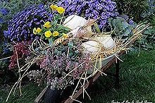 autumn wheelbarrow, container gardening, gardening, home decor