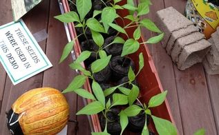 sowing seeds 101, gardening, Peppers and Tomatoes are great for starting in pellets
