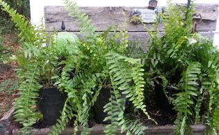 stretching a client s plant budget with ferns, flowers, gardening, perennials