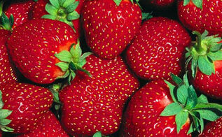 growing strawberries how to plant and grow your own this year, container gardening, flowers, gardening, homesteading, perennials, Is there anything more beautiful that fresh strawberries