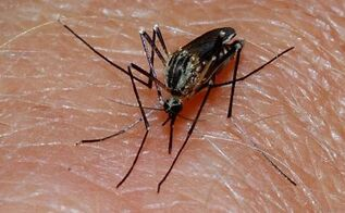 7 natural mosquito repellents to stay safe and happy outdoors, pest control, Mosquito