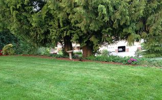 q need help choosing plants shrubs and flowers for yard, flowers, gardening