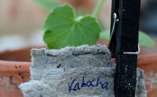 a japanese spring vegetable garden, container gardening, gardening, Kabocha is a Japanese pumpkin or squash