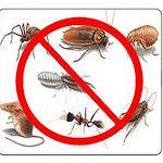 A-1 Watkins Pest & Termite Control