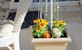 fall small container gardening and pet proof garden ideas, container gardening, flowers, gardening