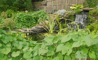 our personal oasis, gardening, landscape, ponds water features