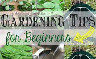 gardening tips for beginners, flowers, gardening