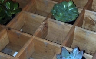 antique pepsi crate turned succulent holder, flowers, gardening, repurposing upcycling, succulents