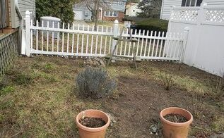 my perennial garden year 2, flowers, gardening, perennials, Looking pretty bleak in March I m planning to create a path up the middle to herb garden ladder