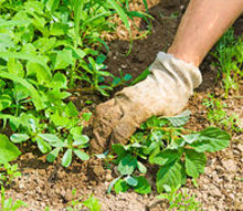 the truth about natural weed killer exposed, gardening, go green, landscape, outdoor living, Apply Corn Gluten So You ll Need To Weed Once Photo via Simply Living Simply