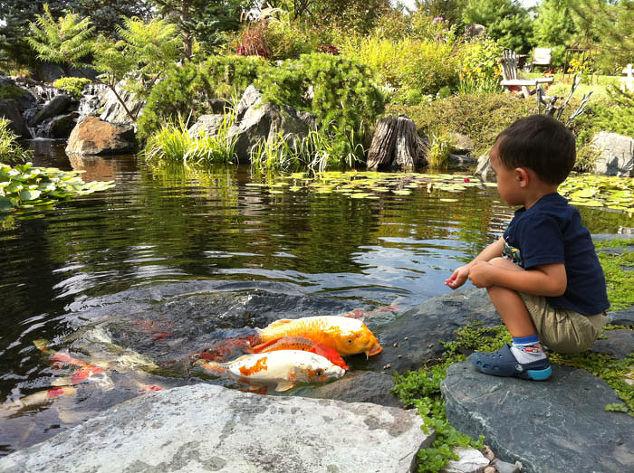 Backyard ponds make fish keeping fun hometalk for Garden pond without fish