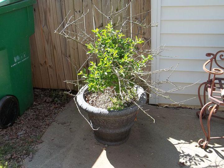shrub tree id, gardening