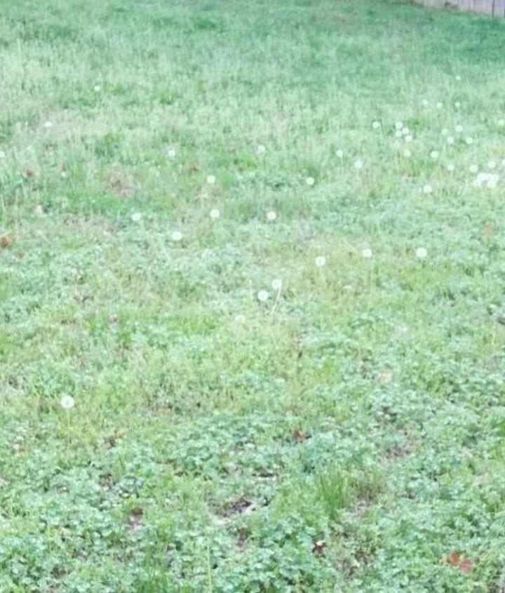 View of weeds in the yard