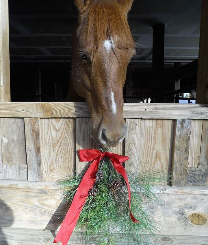 Doc Darling, eation the pine swag, he undid the bow!