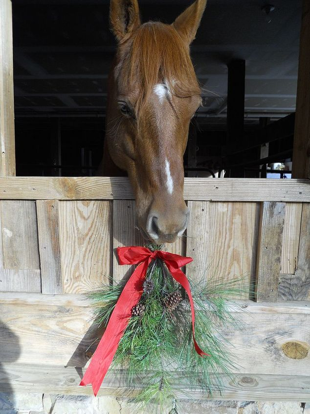 this is a video of the help that doc the horse gave me it is hysterical lol, Doc Darling eation the pine swag he undid the bow