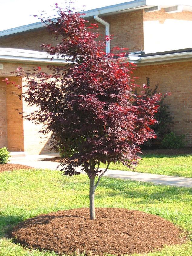 plantings trees in summer, gardening